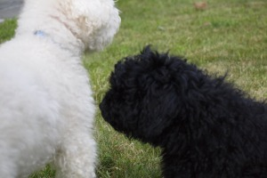 Ouzo sniffing Bailey